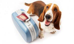 Assurance pour chien de 2eme categorie